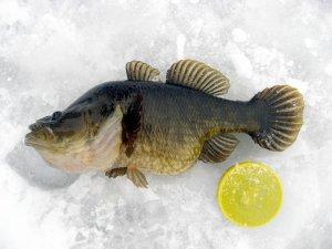 Ловля ротана со льда