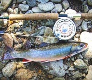 Ловля гольца на Чукотских водоемах