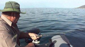 Борьба с морским волком, или ловля лаврака