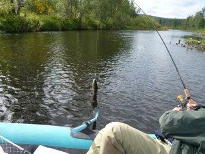 Самые идеальные дни для рыбалки