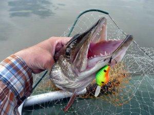 Какую рыбу ловить весной