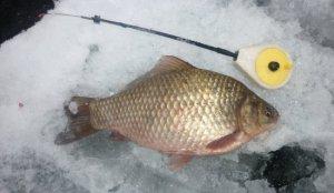 Зимняя рыбалка: Ловим карася
