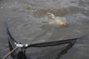 От чего зависит результативная рыбалка на карпа