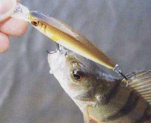 При какой погоде лучше всего ловить рыбу?
