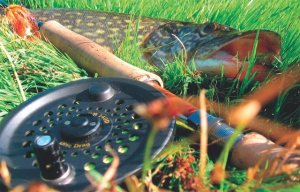 Советы по ловле щуки с помощью нахлыста