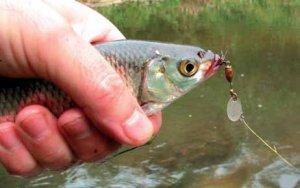 Тонкости рыбалки