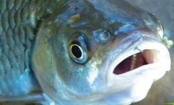 Уникальный подъемник для рыбы
