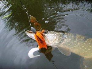 Приманки для ловли крупной щуки в небольших водоёмах