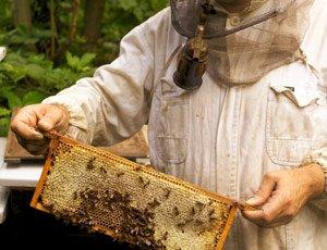 Пчеловодство - еще одно увлечение для рыбака