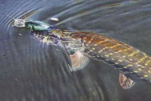 Осенняя щука - незабываемая рыбалка