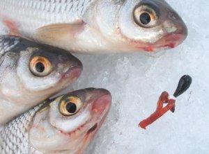 Зимняя рыбалка в феврале