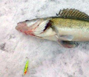 Рыбалка в декабре