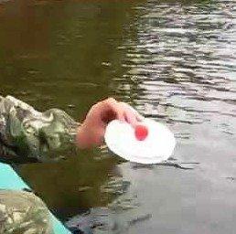 Ловля рыбы неспортивными снастями