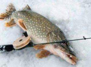 Ошибки рыбаков при ловле на балансир