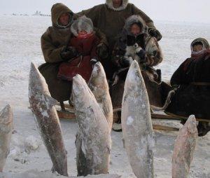 О рыбалке на крайнем севере России