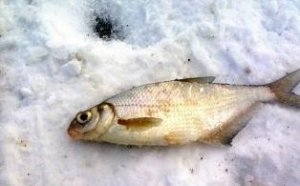 Зимняя ловля фидером