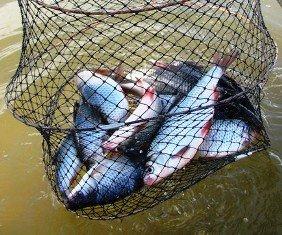 Советы по выбору рыболовного садка