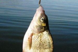 Рыбалка на леща. Советы и рекомендации