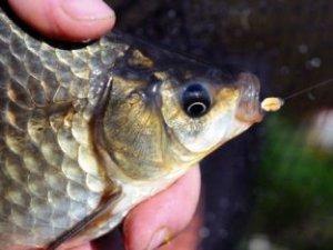 Перловка для рыбалки