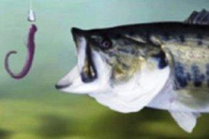 Червь – лучшая рыболовная приманка