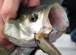 Особенности рыбалки на жереха