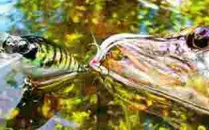 Приманки для ловли хищной рыбы