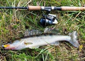 Осенняя рыбалка на судака