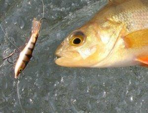Рыбалка. Рекомендации новичкам