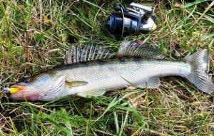 Осенняя рыбалка. Ловля судака