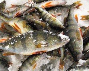 Зимняя рыбалка. Как добиться хорошего улова