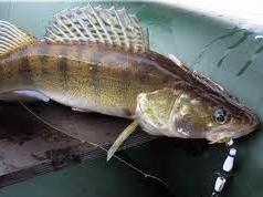 Осенняя рыбалка на судака на берегах Дона
