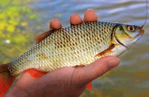 Осенняя рыбалка на плотву