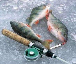 Зимняя рыбалка, советы для начинающих рыболовов