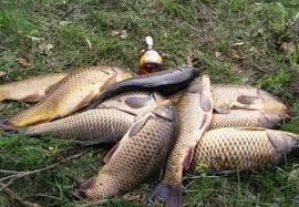 О рыбалке на карпа