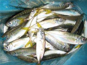 Рыбалка в Геленджике