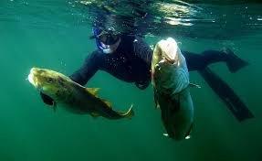 Что необходимо для подводной охоты