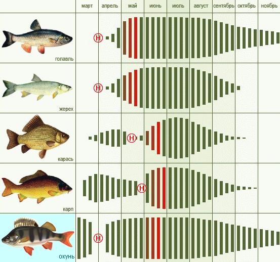 Где найти хороший прогноз клева рыбы?